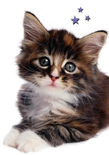 kitten img