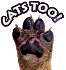 cats too img